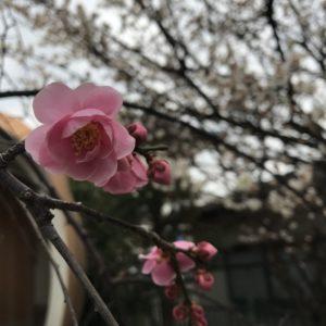 春が待ち遠しい🌸