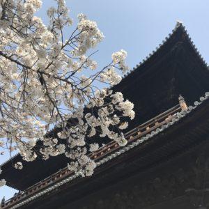 京都「南禅寺」🌸