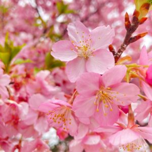 iPhoneで撮れるんです🌸in 愛知県植木センター